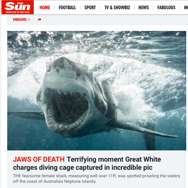 Shark cage diver gets up close and personal with great white